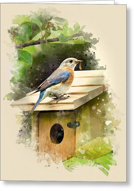 Eastern Bluebird Watercolor Art Greeting Card by Christina Rollo