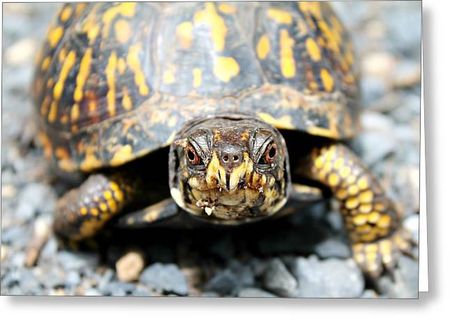 Greeting Card featuring the photograph Eastern Box Turtle by Candice Trimble