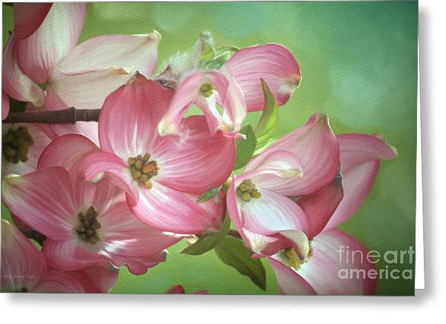 Eastern Dogwood II Greeting Card