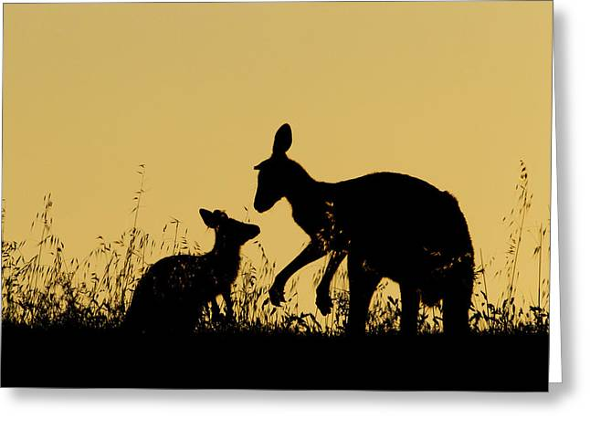 Eastern Grey Kangaroo And Joey Mount Greeting Card