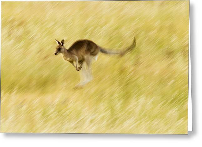 Eastern Grey Kangaroo Hopping Greeting Card by Sebastian Kennerknecht