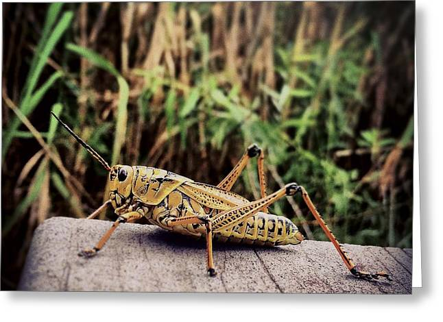Eastern Lubber Grasshopper On Boardwalk Greeting Card by Bradley R Youngberg