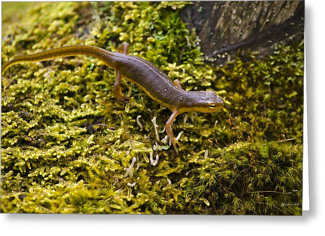 Eastern Newt Aquatic Adult Greeting Card by Christina Rollo