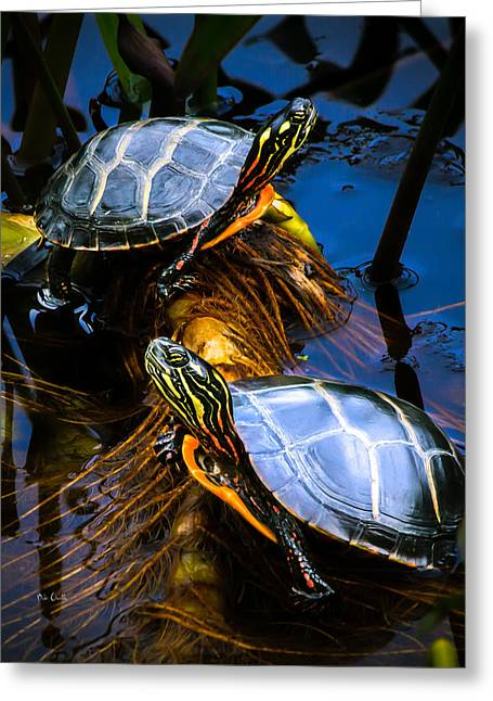 Eastern Painted Turtles Greeting Card by Bob Orsillo