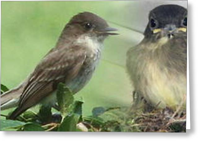 Eastern Phoebe Family Greeting Card