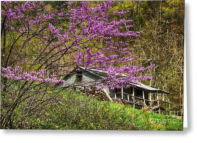 Eastern Redbud And Abandoned Home Greeting Card