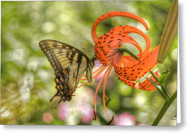 Greeting Card featuring the photograph Eastern Tiger Swallowtail - Papilio Glaucus - Butterfly On Tiger Lily by Ed Cilley