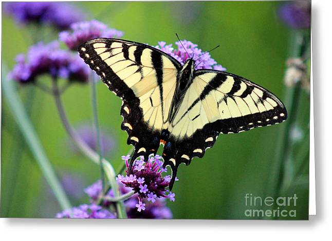 Eastern Tiger Swallowtail Butterfly 2014 Greeting Card