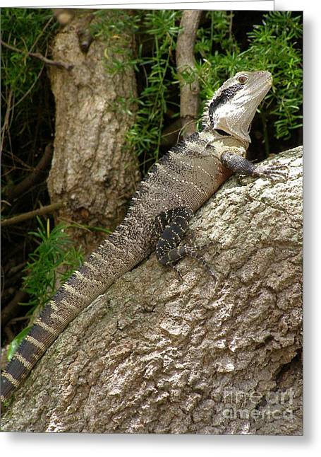 Eastern Water Dragon Greeting Card by Bev Conover