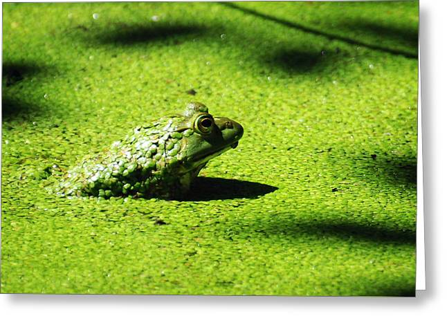 Easy Being Green Greeting Card