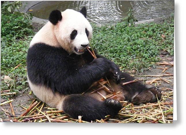 Eating Panda Greeting Card by Noa Yerushalmi