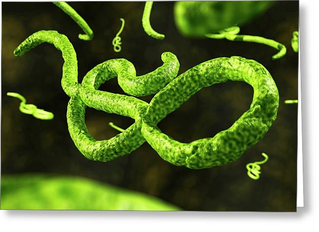 Ebola Virus Particles Greeting Card by Crown Copyright/health & Safety Laboratory Science Photo Library
