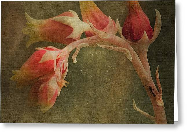 Echervia Blossom Greeting Card by Pam Vick