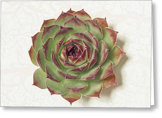 Echeveria Succulent Greeting Card by Lucid Mood