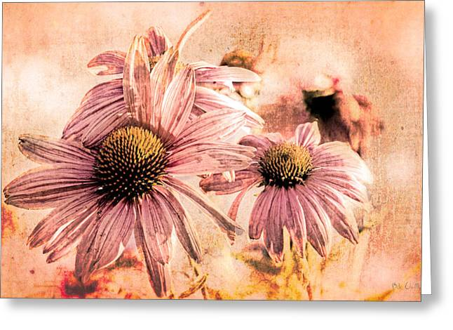 Echinacea Impressions  Greeting Card by Bob Orsillo