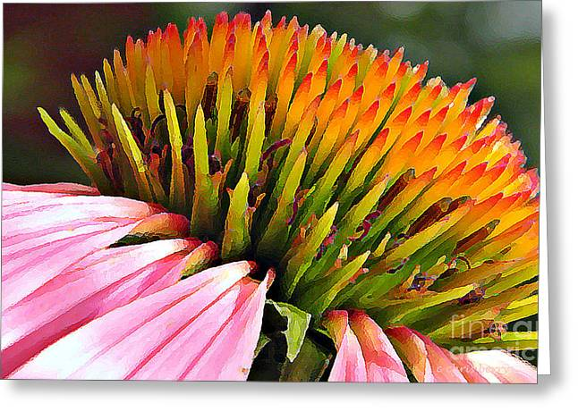 Echinacea In  Watercolors  Greeting Card by Chris Berry