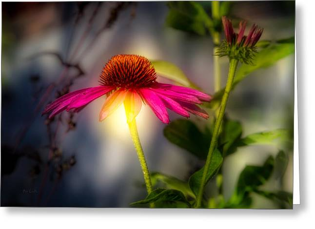 Echinacea Sunrise Greeting Card by Bob Orsillo