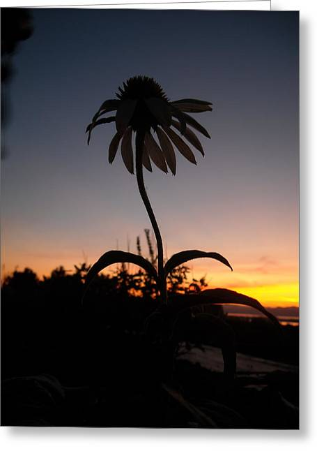 Echinacea Sunset Greeting Card