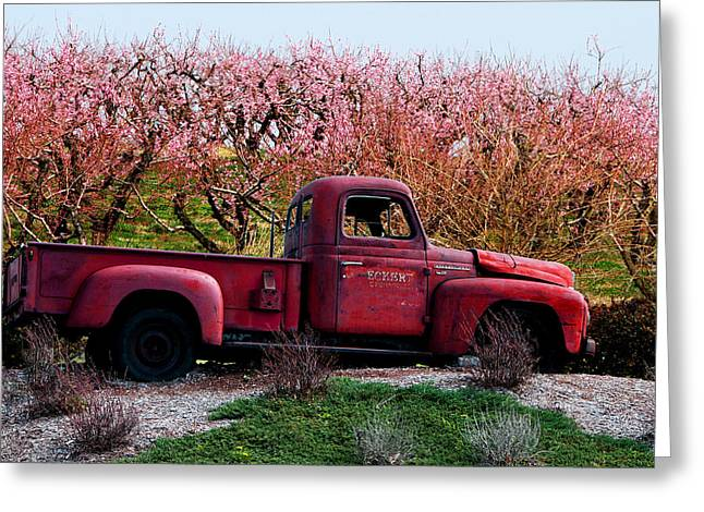 Eckert Orchards Belleville Greeting Card