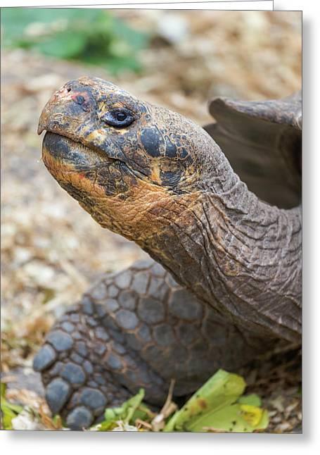 Ecuador, Galapagos Islands, Santa Cruz Greeting Card