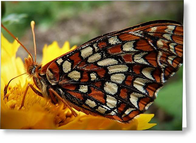 Greeting Card featuring the photograph Edith Checkerspot by Julia Hassett