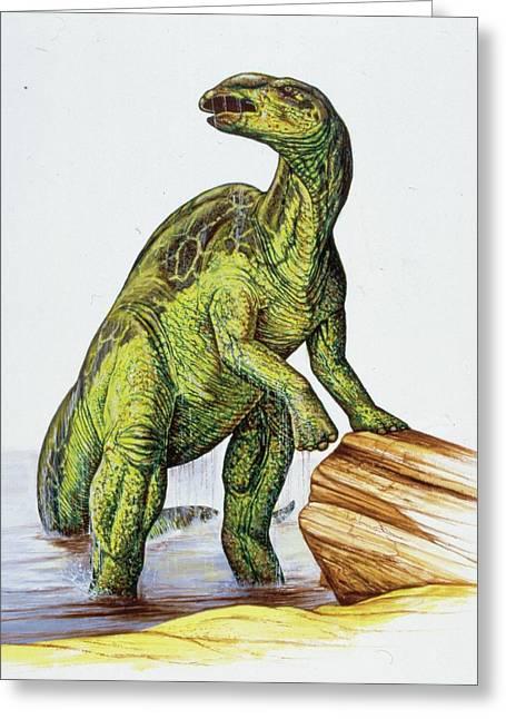 Edmontosaurus Dinosaur Greeting Card by Deagostini/uig