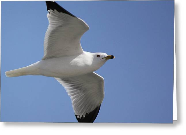 Greeting Card featuring the photograph Effortless Flight by Bill Woodstock