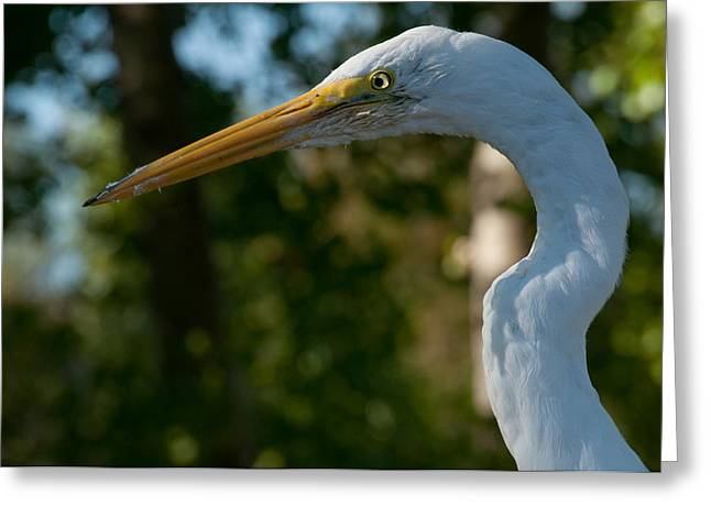 Egret #10 Greeting Card by Wiley Walker