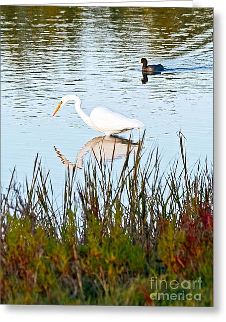 Greeting Card featuring the photograph Egret And Coot In Autumn by Kate Brown