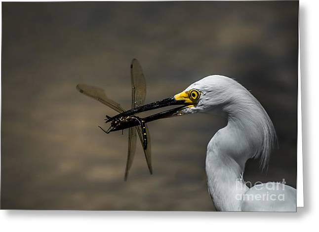 Egret And Dragonfly Greeting Card by Robert Frederick
