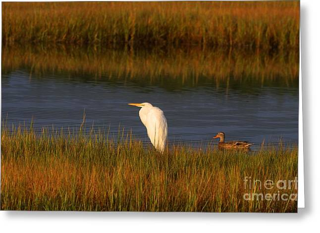 Egret And Duck Greeting Card