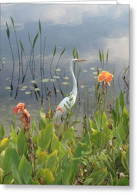 Egret And Iris Greeting Card