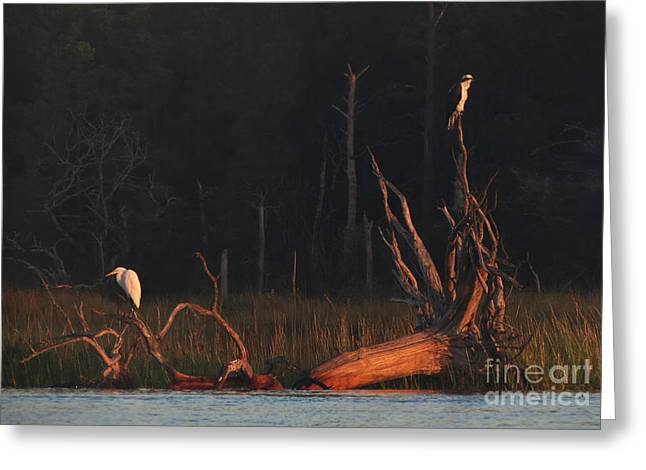 Greeting Card featuring the photograph Egret And Osprey Sunrise by Deborah Smith