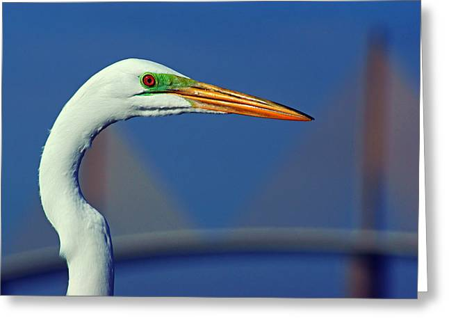 Greeting Card featuring the photograph Egret And Skyway II by Daniel Woodrum