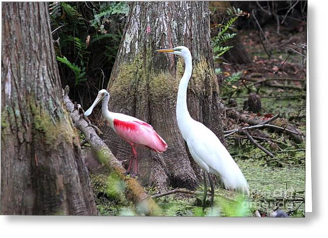 Egret And Spoonbill Greeting Card by Theresa Willingham