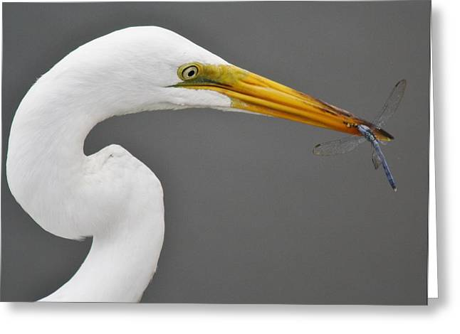 Egret And The Dragonfly Greeting Card by Paulette Thomas