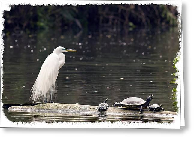 Egret And Turtles Greeting Card