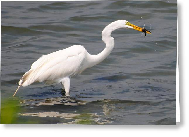 Egret At Lunch Greeting Card