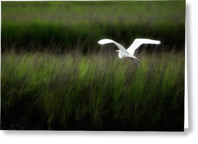 Greeting Card featuring the photograph Egret At Pawleys Island by Frank Bright