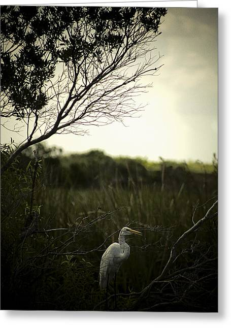 Egret At Sunset Greeting Card