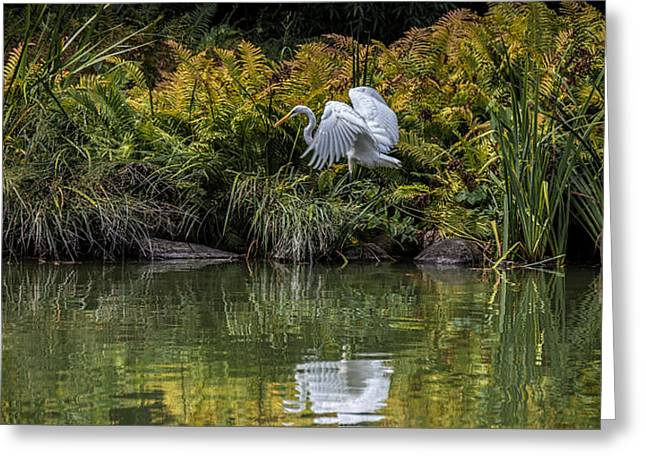Greeting Card featuring the photograph Egret At The Lake by Chris Lord