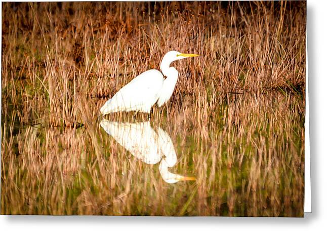 Egret Basking In The Morning Sun Greeting Card