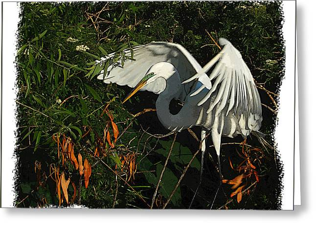 Egret Beauty Greeting Card by Wynn Davis-Shanks