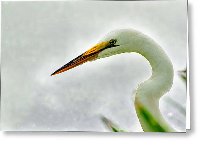 Egret Close-up Greeting Card