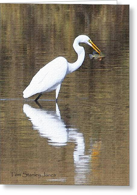 Egret Eats Fish Greeting Card by Tom Janca