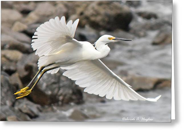 Egret Flight Greeting Card