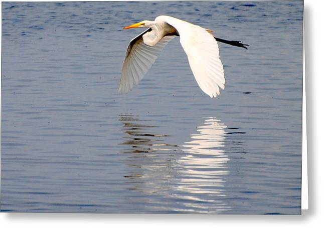 Egret Flying At Harkers Island Greeting Card
