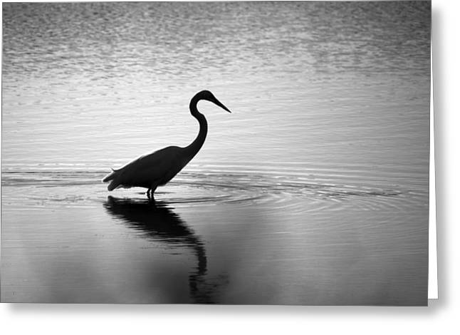 Egret In Bw Greeting Card