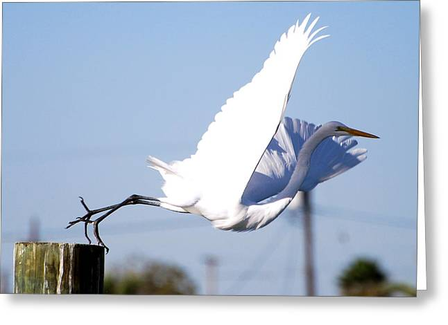 Greeting Card featuring the photograph Egret In Flight by Linda Cox