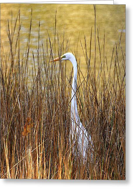 Greeting Card featuring the photograph Egret In The Grass by William Selander